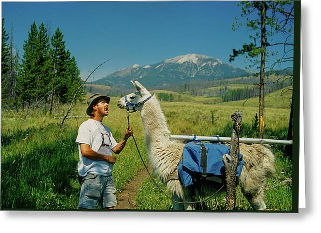 Man Teasing A Llama Greeting Card by Jerry Voss