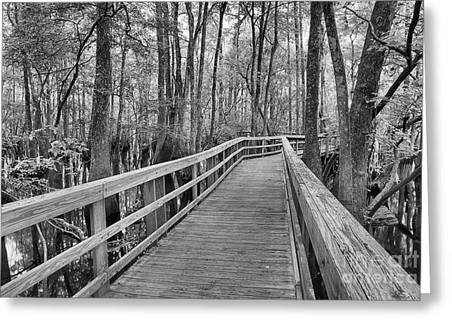 Manatee Springs Greeting Cards - Manatee Springs Black And White Boardwalk Greeting Card by Adam Jewell