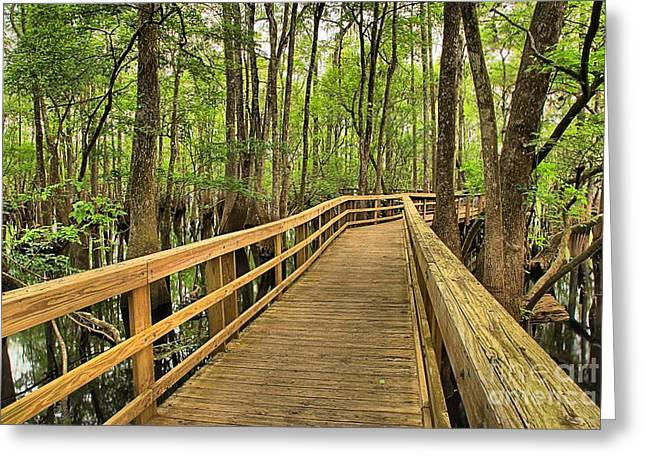 Manatee Springs Greeting Cards - Manatee Springs Boardwalk Greeting Card by Adam Jewell
