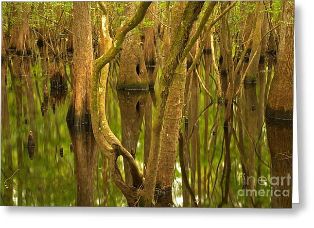 Manatee Springs Greeting Cards - Manatee Springs Cypress Reflections Greeting Card by Adam Jewell