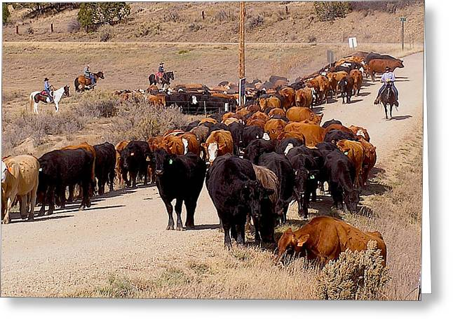 Mancos Greeting Cards - Mancos Valley cattle drive Greeting Card by FeVa  Fotos