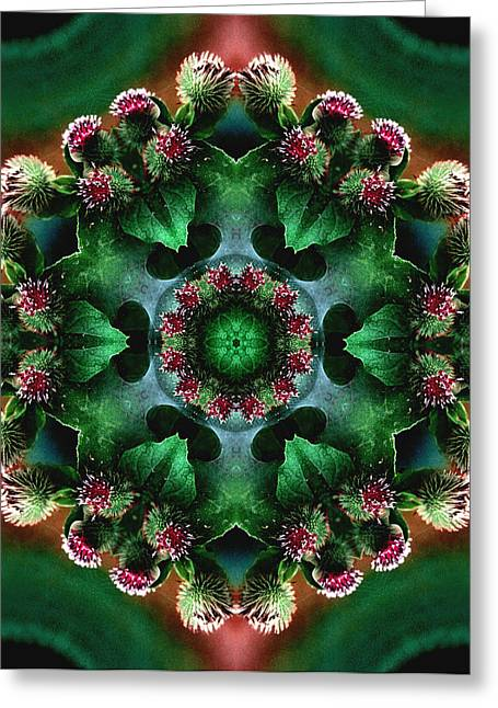 Mandala Bull Thistle Greeting Card by Nancy Griswold