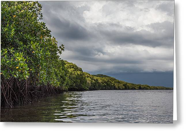 Mangrove Forest Greeting Cards - Mangrove Forest Greeting Card by Ben Adkison