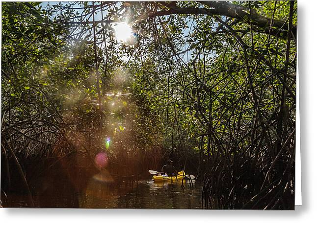 Mangrove Forest Greeting Cards - Mangrove Kayaking Greeting Card by Ben Adkison
