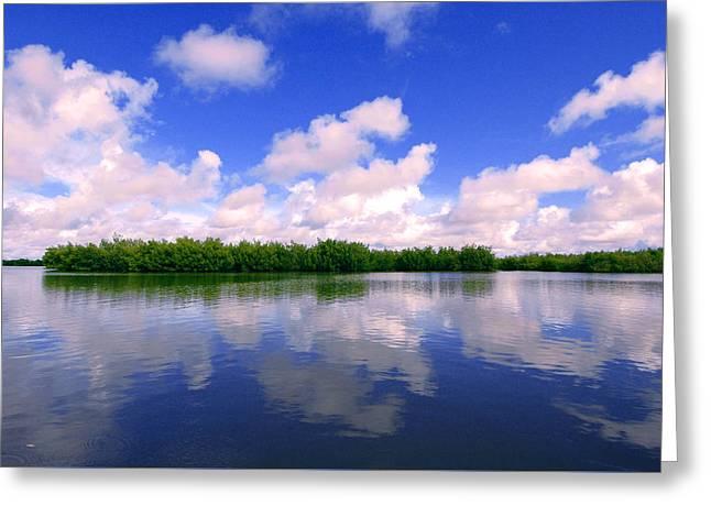 Mangrove Forest Greeting Cards - Mangroves in Casamance Senegal Greeting Card by Eduardo Huelin