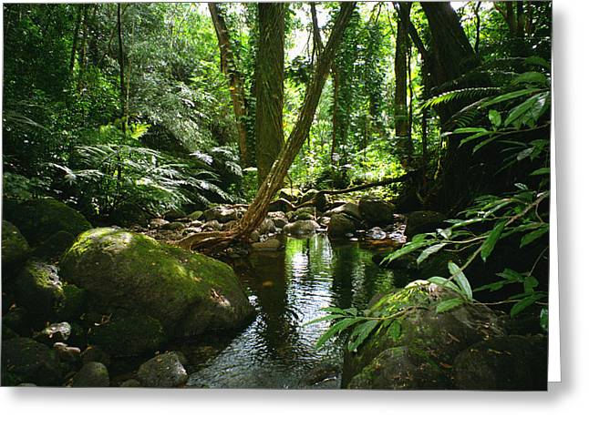 Kevin Smith Greeting Cards - Manoa Valley Stream Greeting Card by Kevin Smith