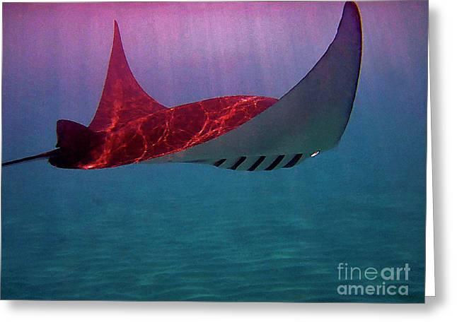 Manta Rays Greeting Cards - Manta Sailing Greeting Card by Bette Phelan