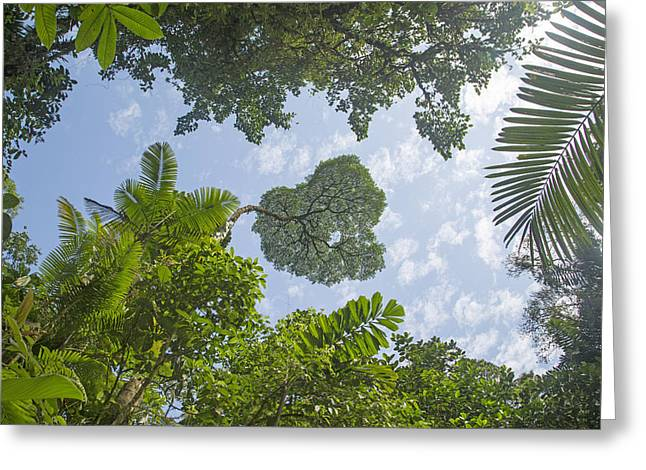 Manuel Antonio Jungle Greeting Card by Betsy C Knapp