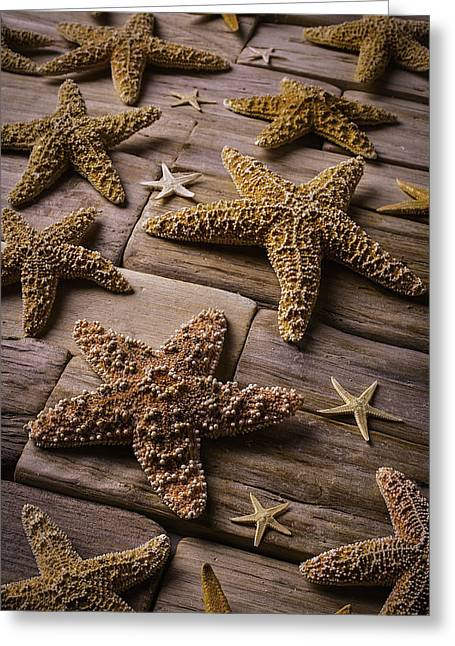 Orange Starfish Greeting Cards - Many Stars Greeting Card by Garry Gay