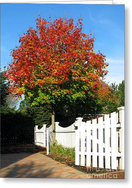Alleys Greeting Cards - Maple and Picket Fence Greeting Card by Olivier Le Queinec
