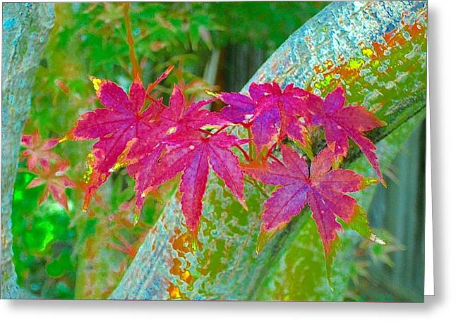 Fall Trees Greeting Cards - Maple Close-up Autumn Greeting Card by Scott L Holtslander