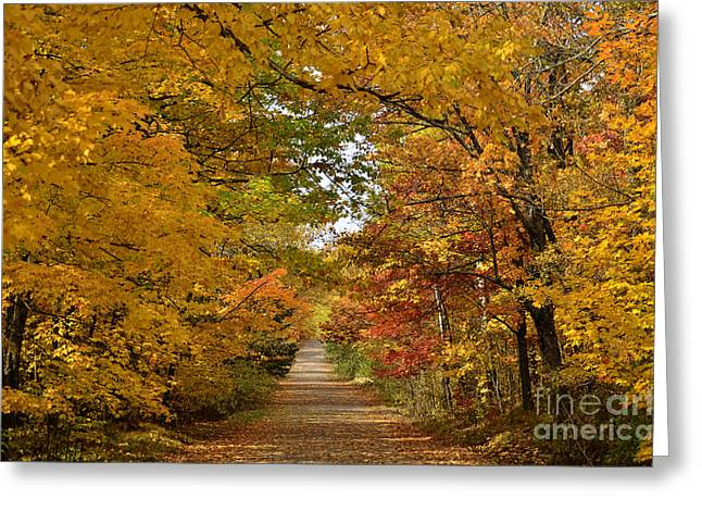 Misty Pine Photography Greeting Cards - Maple Lane Greeting Card by Whispering Feather Gallery