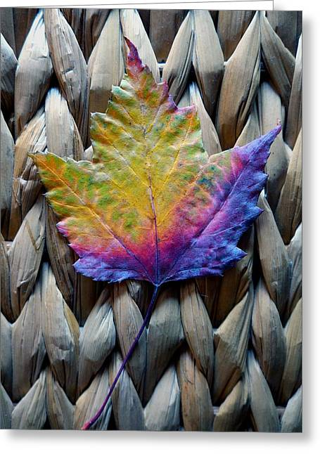 Photo Art Gallery Greeting Cards - Maple Leaf Kaleidoscope Greeting Card by Mike Solomonson