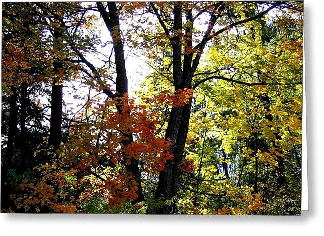 Maple Mania 16 Greeting Card by Will Borden