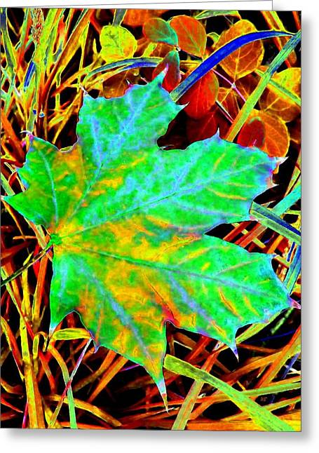 Fall Grass Greeting Cards - Maple Mania 21 Greeting Card by Will Borden