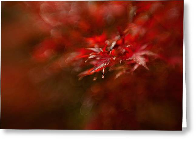 Raindrop Greeting Cards - Maple Greeting Card by Mel Brackstone