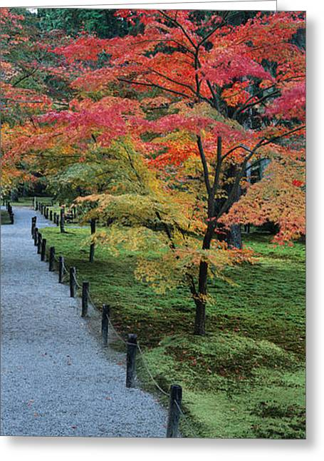 Autumn Colors Greeting Cards - Maple Tree At The Roadside, Sanzen-in Greeting Card by Panoramic Images