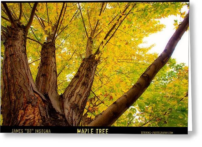 Maple Tree Poster Greeting Card by James BO  Insogna