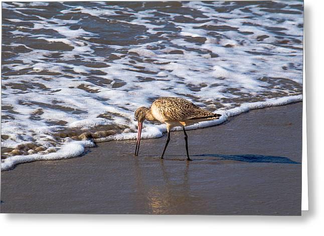 Ventura California Greeting Cards - Marbled Godwit Feeding Greeting Card by Danny Goen