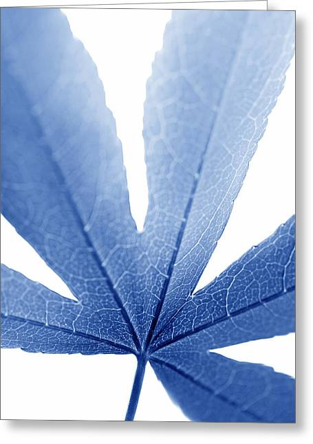 Translucent Light Greeting Cards - Marco Leaf Blue Vertical Greeting Card by Jennie Marie Schell