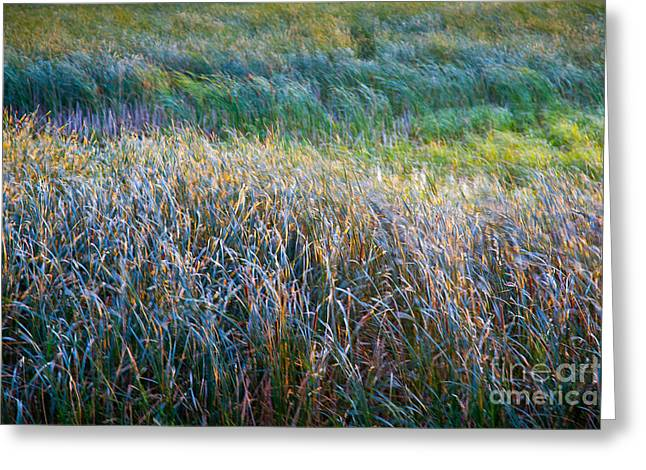 Wild And Scenic Greeting Cards - Mardi Grass Greeting Card by Susan Cole Kelly