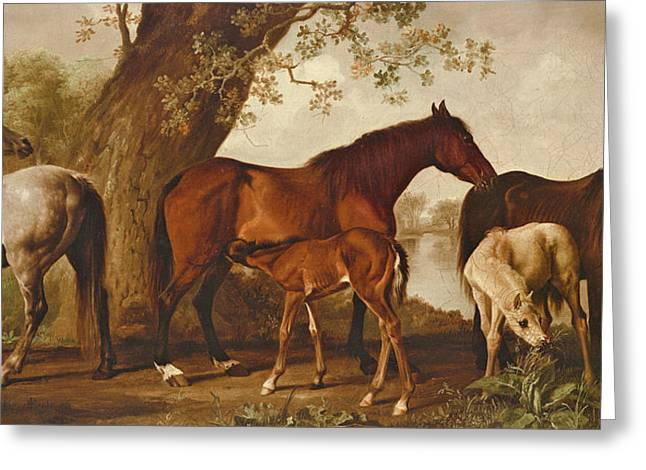 Mare And Foals Greeting Card by George Stubbs