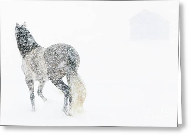 Andalusian Greeting Cards - Mare in a Blizzard II Greeting Card by Carol Walker