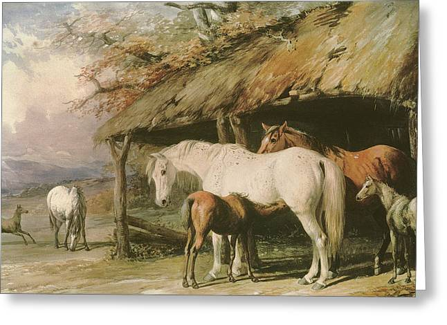 Nature Scene Paintings Greeting Cards - Mares and Foals Greeting Card by William Barraud