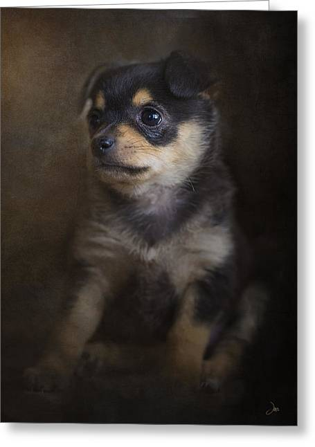 Puppy Digital Art Greeting Cards - Margarita At Eight Weeks Greeting Card by Ron Jones
