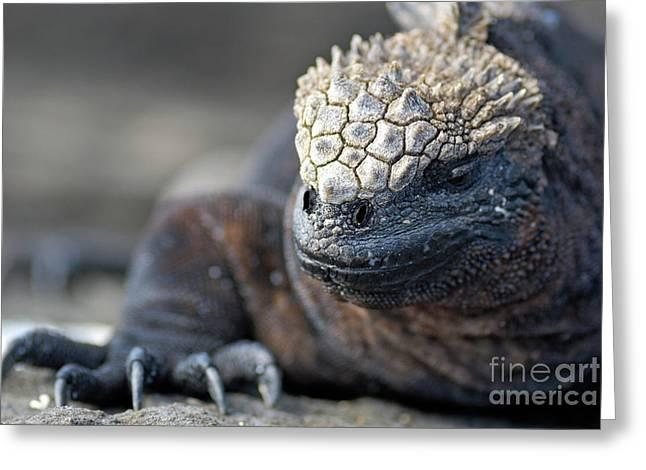 Marine Iguana Greeting Card by Sami Sarkis