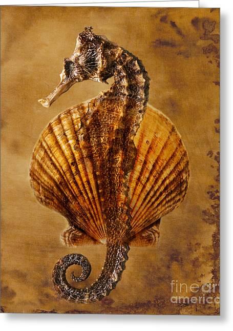 Beach Photos Greeting Cards - Marine Life Greeting Card by George Mattei
