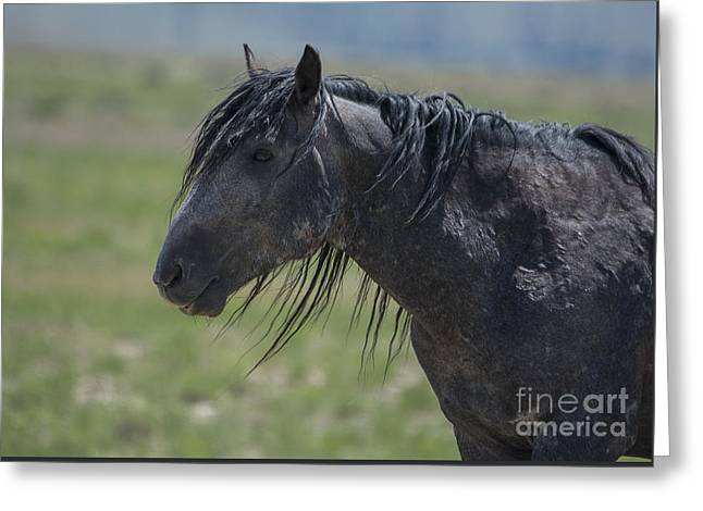 Wild Horse Pyrography Greeting Cards - Marked by life II  Greeting Card by Nicole Markmann Nelson