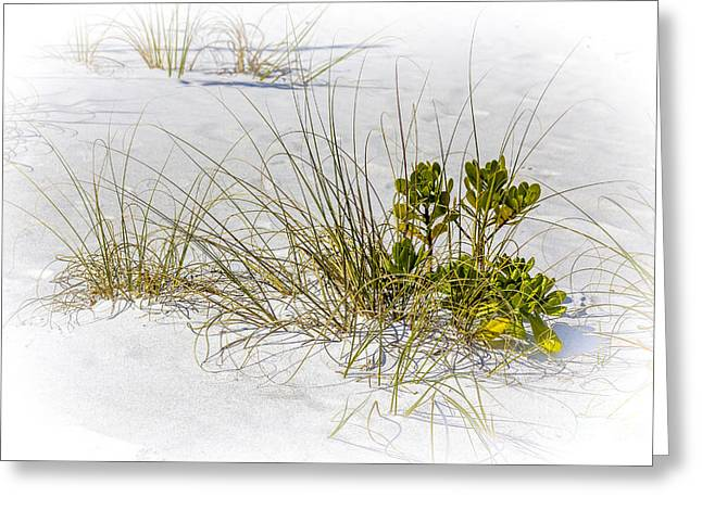 Marngrove And Sea Oats Greeting Card by Marvin Spates