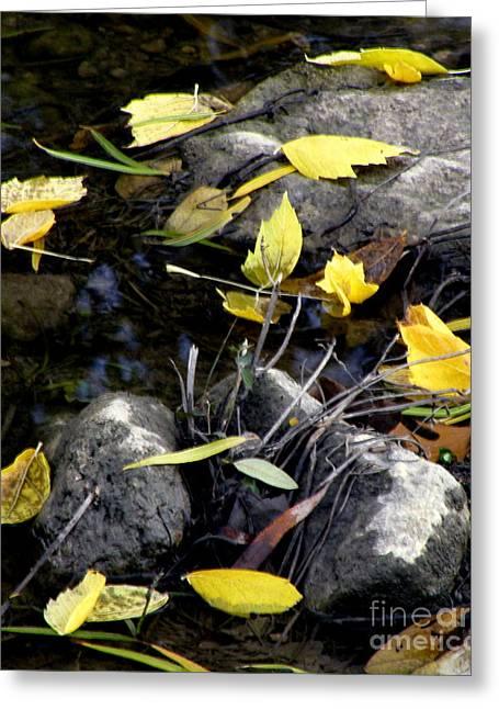 Fallen Leaf On Water Greeting Cards - Marooned Greeting Card by Joe Jake Pratt