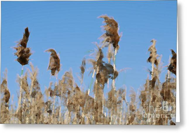 Morass Greeting Cards - Marsh Grass Greeting Card by Christopher Purcell