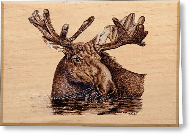 Aquatic Pyrography Greeting Cards - Marsh Moose Greeting Card by Ron Haist