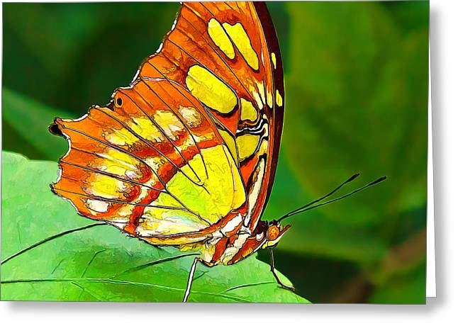 Marvelous Malachite Butterfly Greeting Card by ABeautifulSky Photography