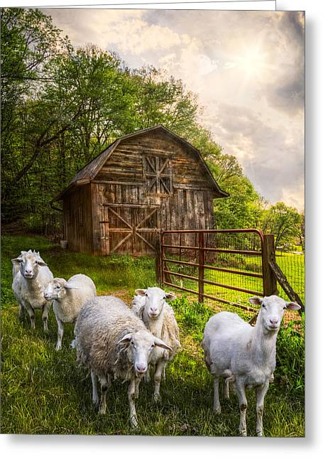 Red Roofed Barn Greeting Cards - Mary Had a Little Lamb Greeting Card by Debra and Dave Vanderlaan