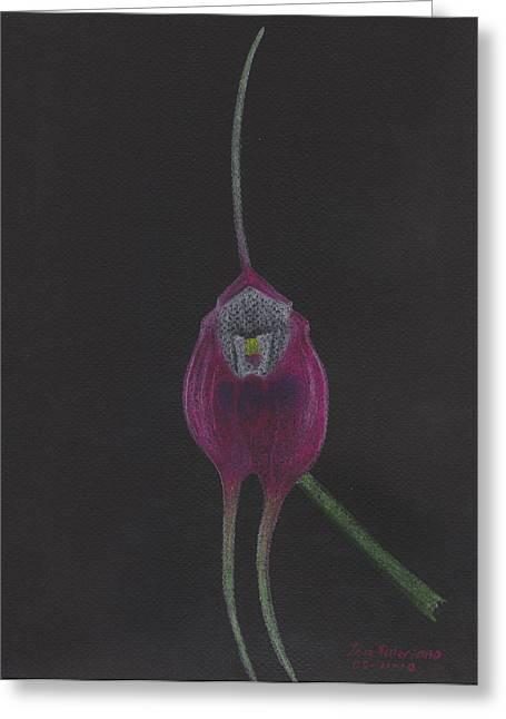 Pastel Greeting Cards - Masdevallia Infracta Orchid Greeting Card by Jose Valeriano