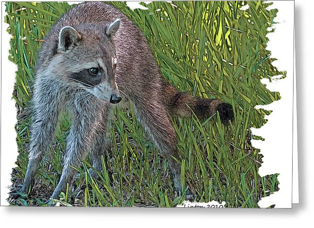 Raccoon Digital Art Greeting Cards - Masked Bandit Greeting Card by Larry Linton