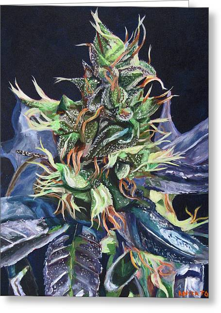 Bud Greeting Cards - Master Kush Greeting Card by Anita Toke
