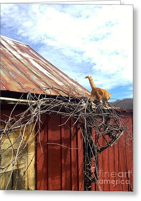 Tin Roof Greeting Cards - Master of the Vine Greeting Card by Christina McKinney