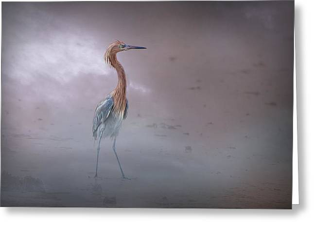 Water Fowl Greeting Cards - Mating Egret Greeting Card by Darrell Hutto