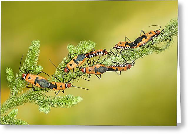 Mating Greeting Cards - Mating Together Greeting Card by Wilianto