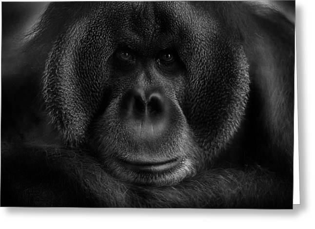 Orang-utans Greeting Cards - Maurice Greeting Card by Kay