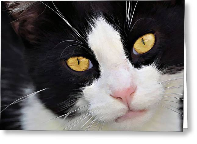 Cat Photographs Greeting Cards - Maxi Cat Greeting Card by Kathy Jennings