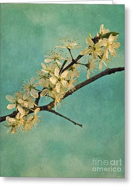 Mint Green Greeting Cards - Mayblossom Greeting Card by Priska Wettstein