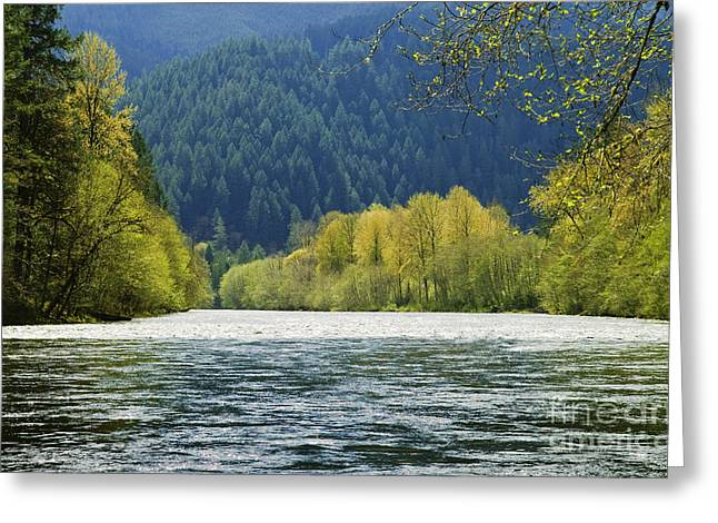 Beautiful Landing Greeting Cards - McKenzie River Greeting Card by Greg Vaughn - Printscapes
