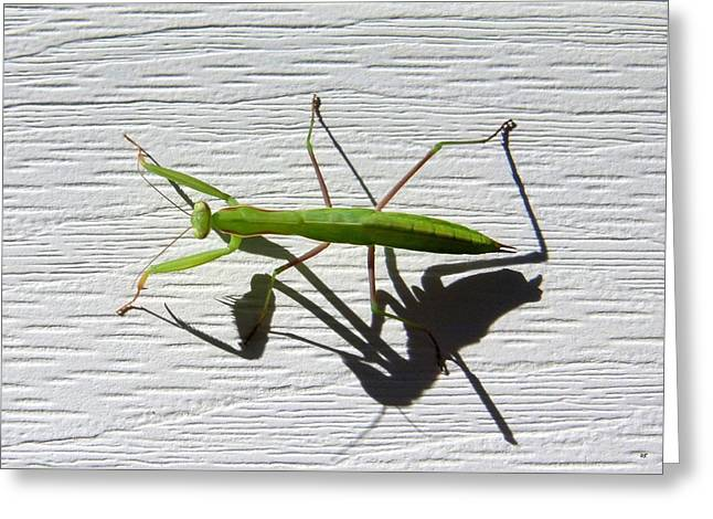 Mantis Greeting Cards - Me And My Shadow Greeting Card by Will Borden
