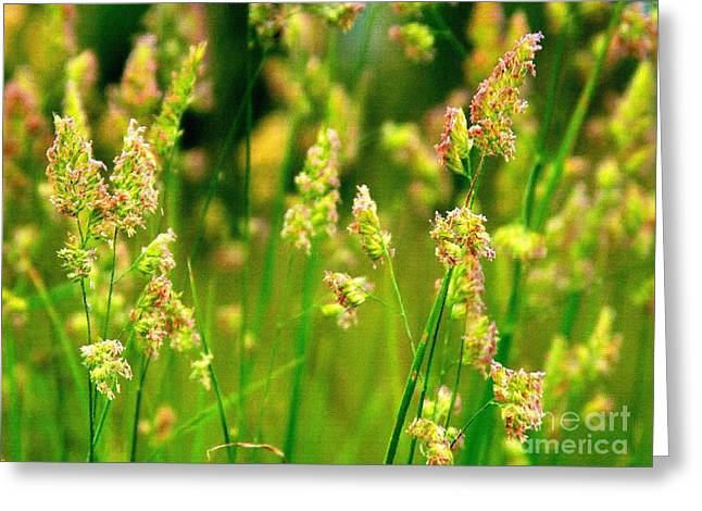 Shabbychic Greeting Cards - Meadow Grasses. Greeting Card by ShabbyChic fine art Photography